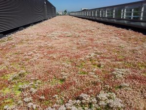 MOY Green Roofing the data centre. Raising the landscape